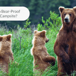 Image of bears looking around in the grass field