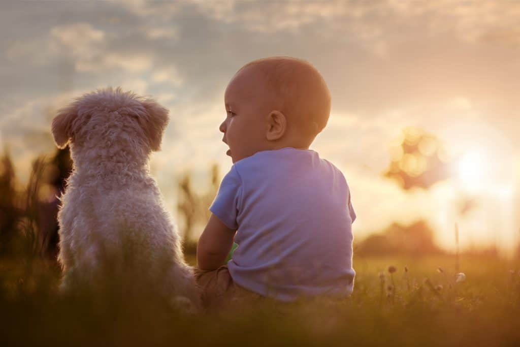 Picture of Happy baby boy playing with his dog in the park.