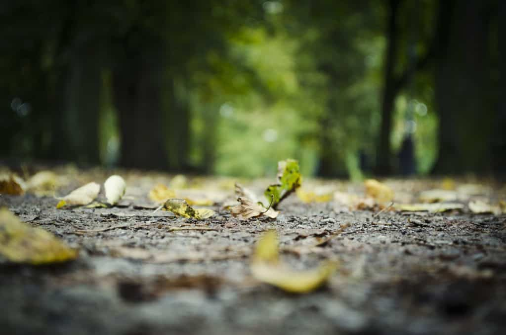 Image of Fallen leaves on a road that leads to a forest