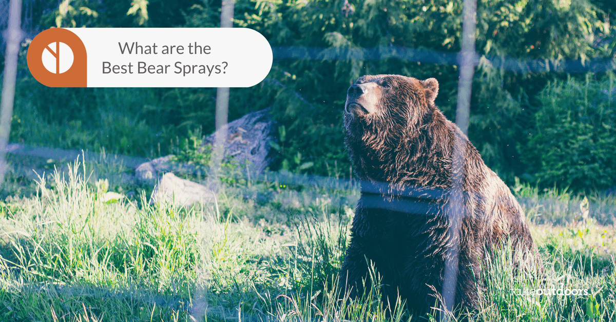 Featured Image for Best Bear Spray On The Market