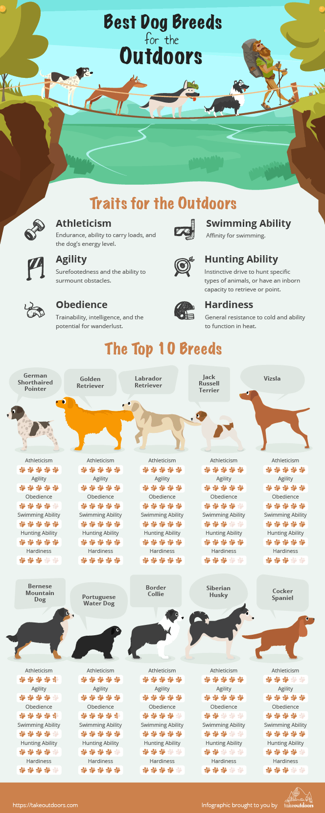 Infographic showing the traits of dogs suited for the outdoors and the top 10 breeds