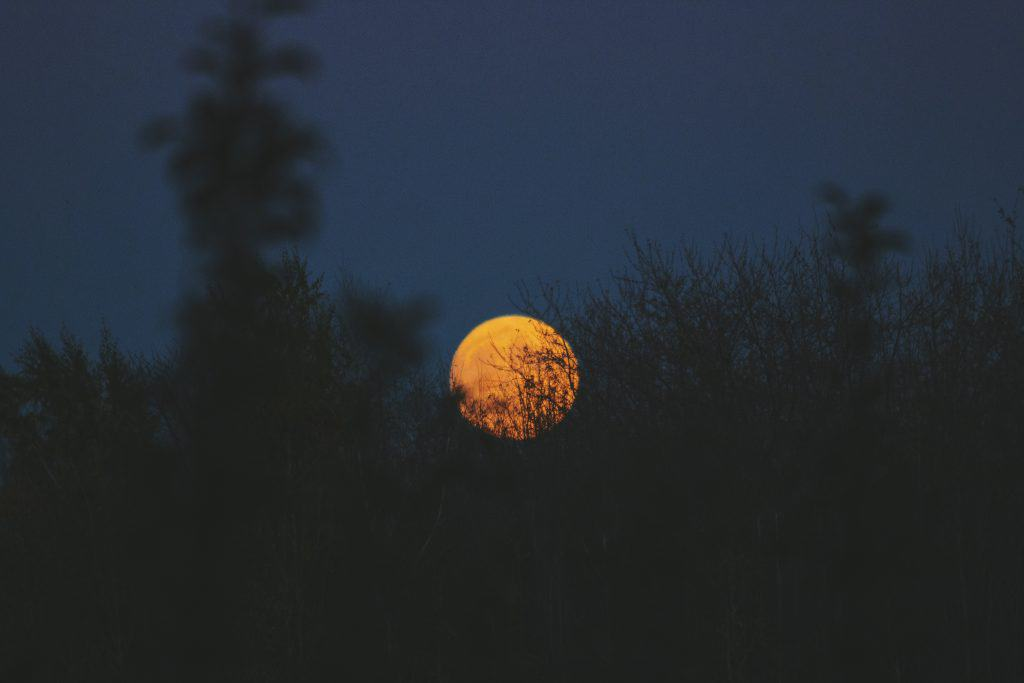 Picture of a full moon behind tall grass