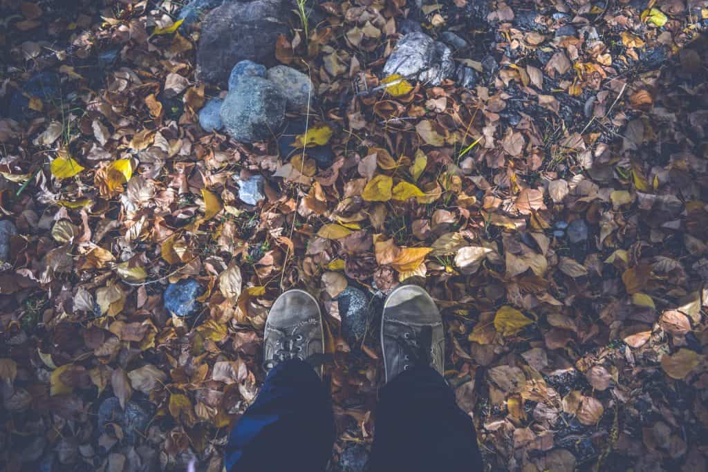Standing on ground with a lot of leaves and rocks