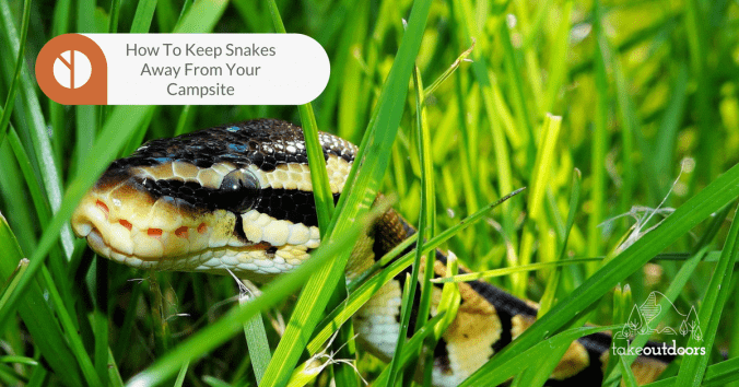 How to Keep Snakes Away from Your Campsite - TakeOutdoors