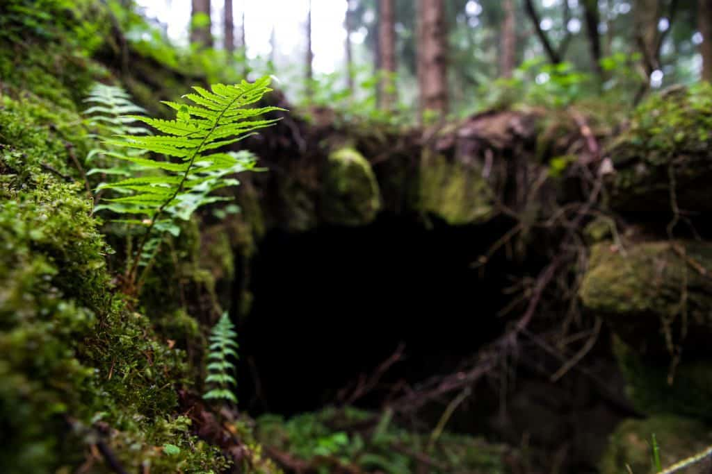 Hints of Bear Cave